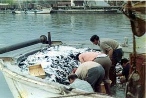 pescata di cefali