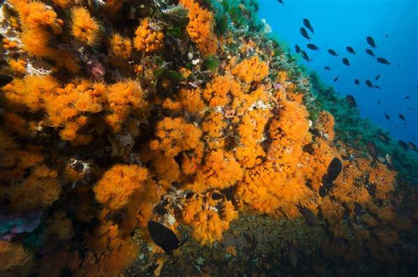 corallimediterraneo