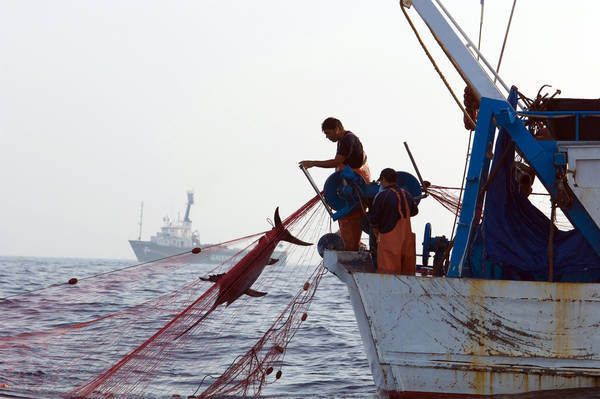 Ue presenta campagna su pesca; Wwf, ora Stati la attuino
