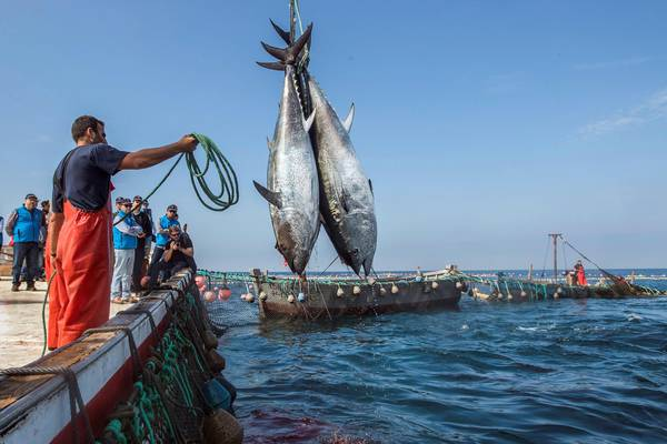 Pesca: stop burocrazia e più sostenibilità in agenda 2020